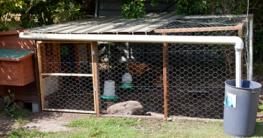 Marder im Hühnerstall